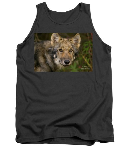 Timber Wolf In Denali Tank Top