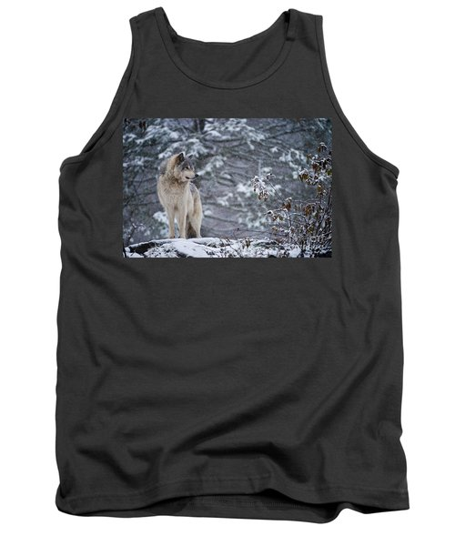Timber Wolf Pictures 189 Tank Top