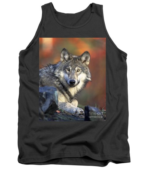 Tank Top featuring the photograph Wolf Predator Canidae Canis Lupus Hunter by Paul Fearn