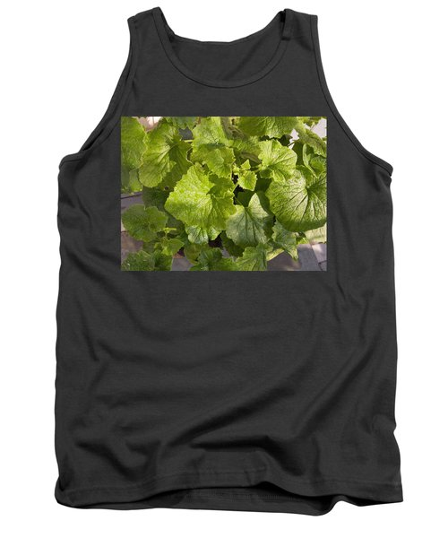 Tank Top featuring the photograph A Green Leafy Vegetable Plant After Watering In Bright Sunrise by Ashish Agarwal