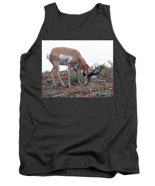 Tank Top featuring the photograph Antelope Grazing by Art Whitton