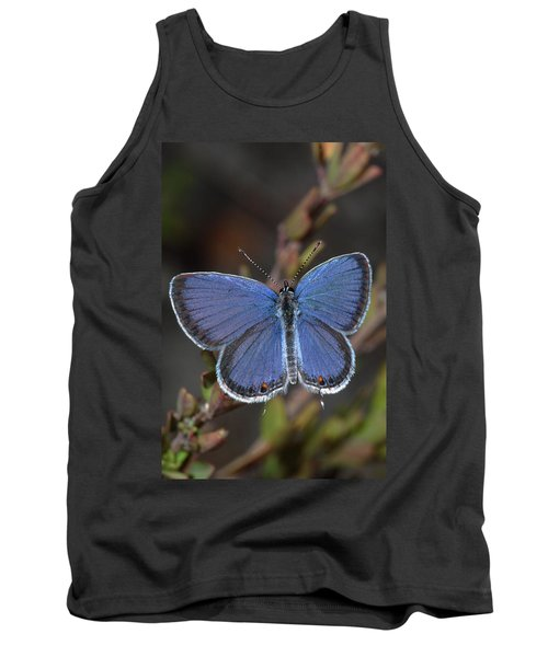 Eastern Tailed Blue Butterfly Tank Top