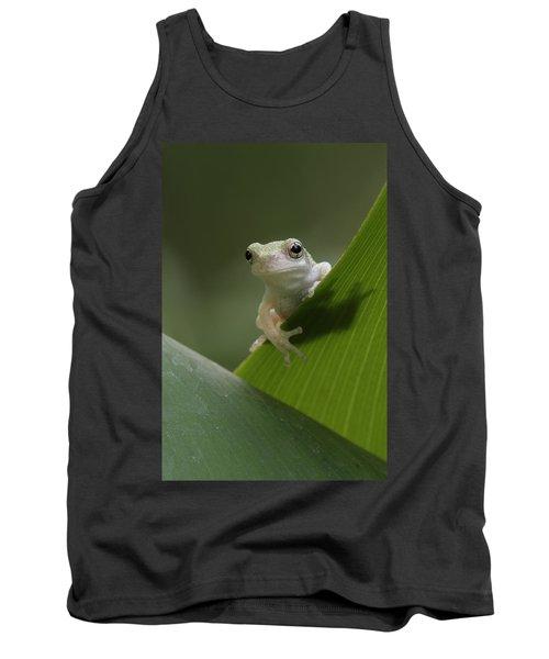 Juvenile Grey Treefrog Tank Top
