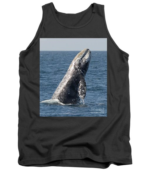 Breaching Gray Whale In Dana Point Tank Top