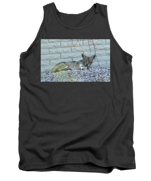 Tank Top featuring the photograph Coyote by Anne Rodkin