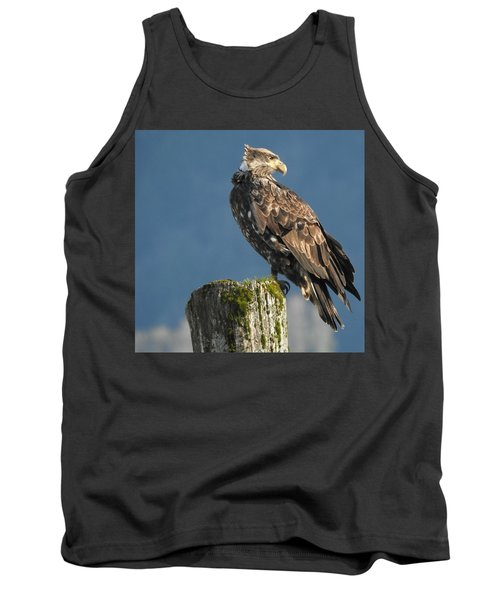 Immature Bald Eagle Tank Top by Brian Chase