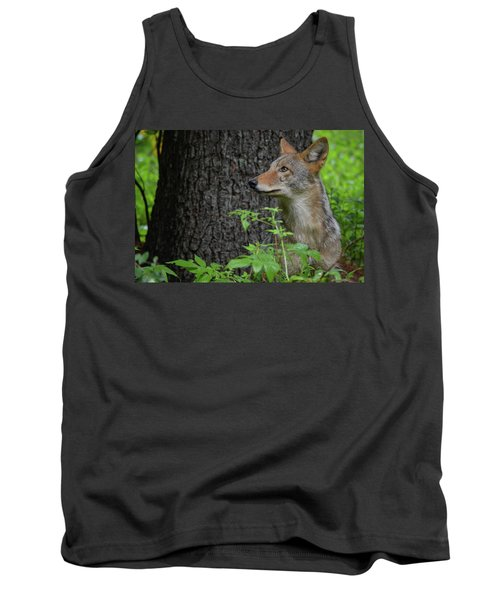 Early Morning Coyote In Maine Tank Top