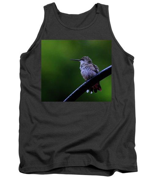 Hummingbird Portrait Tank Top