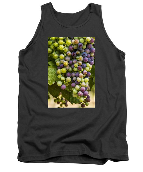 Red Wine Grapes Hanging On The Vine Tank Top