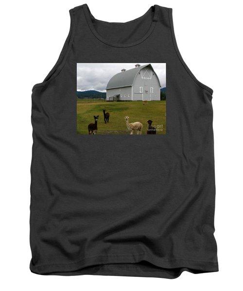 Alpacas Tank Top by Greg Patzer