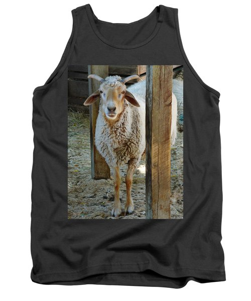 Awassi Sheep Tank Top by Steve Taylor