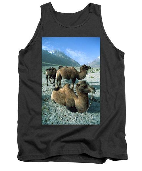 Bactrian Camel Camelus Bactrianus Group Tank Top
