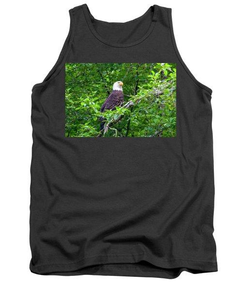 Bald Eagle In Tree Tank Top