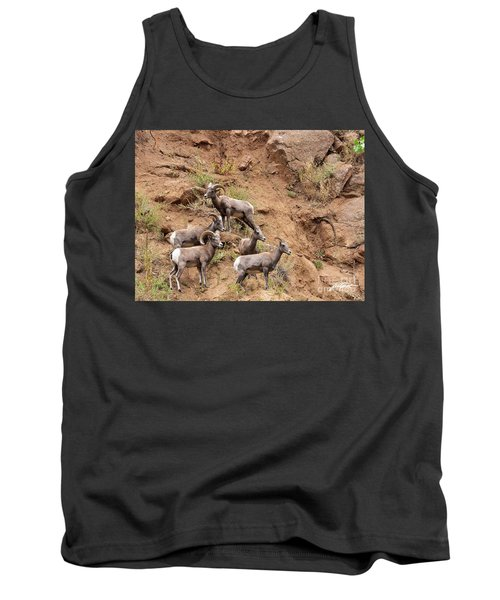 Big Horn Sheep Family Tank Top
