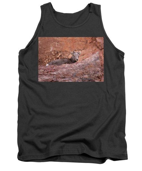 Bighorn Lamb1 Tank Top