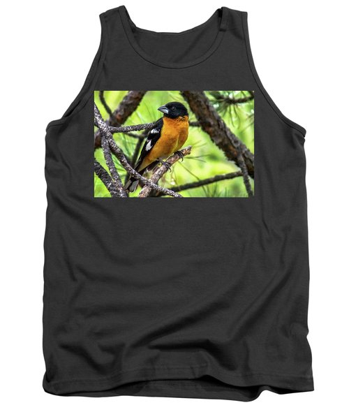 Black-headed Grosbeak Tank Top