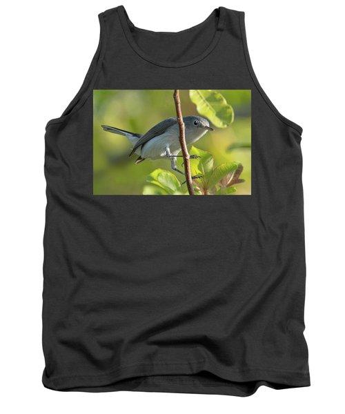 Blue Gray Gnatcatcher Tank Top