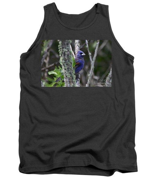 Blue Grosbeak In A Mangrove Tank Top