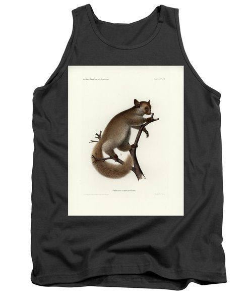 Brown Greater Galago Or Thick-tailed Bushbaby Tank Top by Hugo Troschel and J D L Franz Wagner