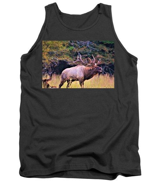 Bull Calling His Herd Tank Top
