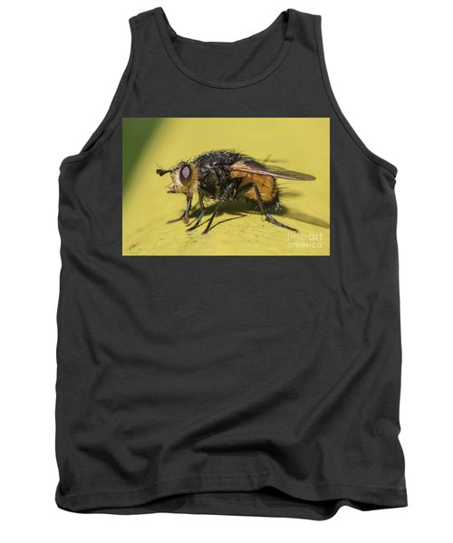 Close Up - Tachinid Fly - Nowickia Ferox Tank Top