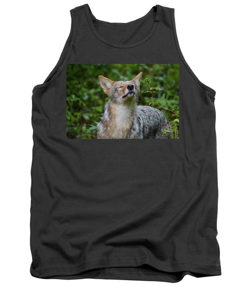 Coyote Soaking Up The Morning Sun Tank Top