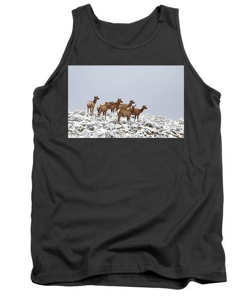 Elk Cows On The Alert In The Tetons Tank Top