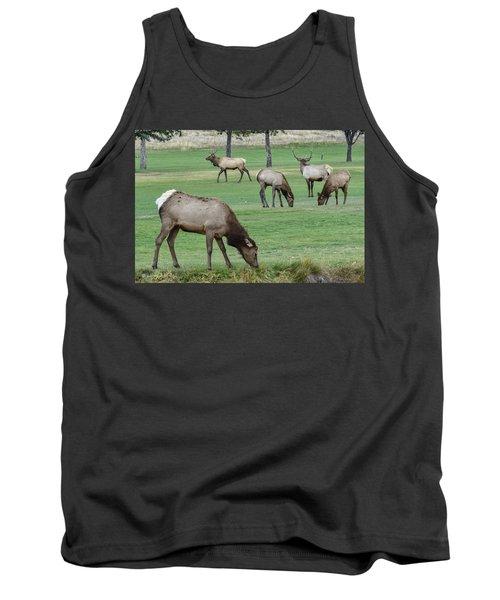 Elk On Golf Course Estes Park Colorado Tank Top