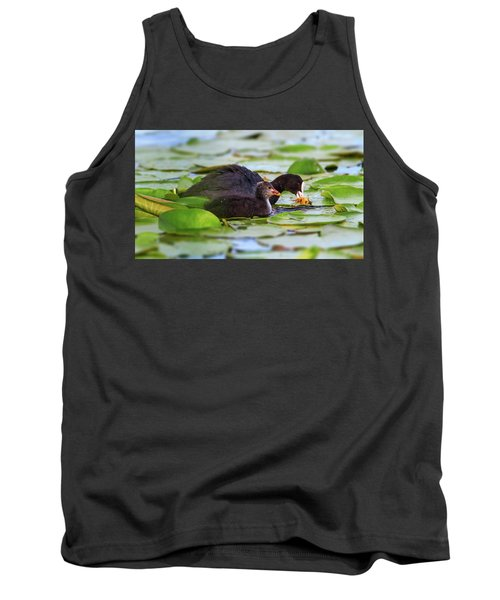 Eurasian Or Common Coot, Fulicula Atra, Duck And Duckling Tank Top by Elenarts - Elena Duvernay photo