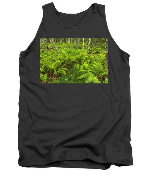 Ferns And Birch In Soft Light Tank Top