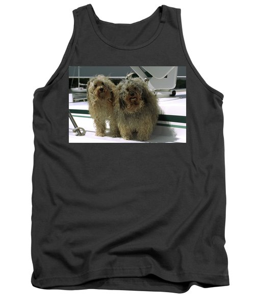 Havanese Dogs Tank Top by Sally Weigand