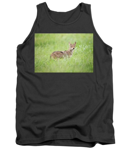 Juvenile Coyote Tank Top
