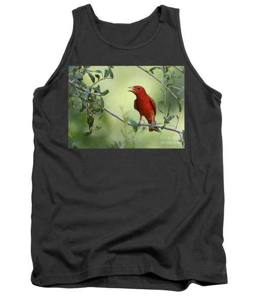 Male Summer Tanager Tank Top by Myrna Bradshaw