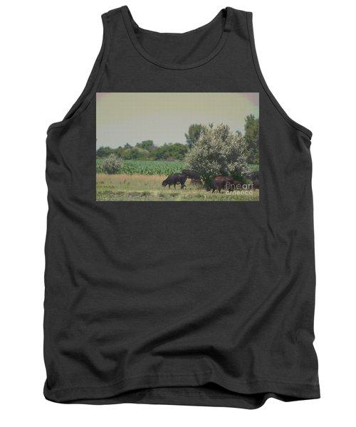 Nebraska Farm Life - Black Cows Grazing Tank Top