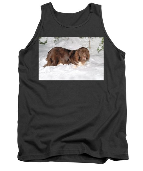 Tank Top featuring the photograph Newf In Snow by Debbie Stahre
