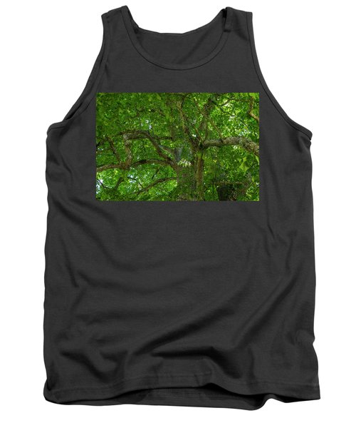 Old Linden Tree. Tank Top by Ulrich Burkhalter