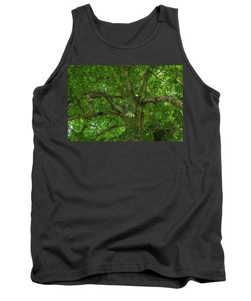 Old Linden Tree. Tank Top