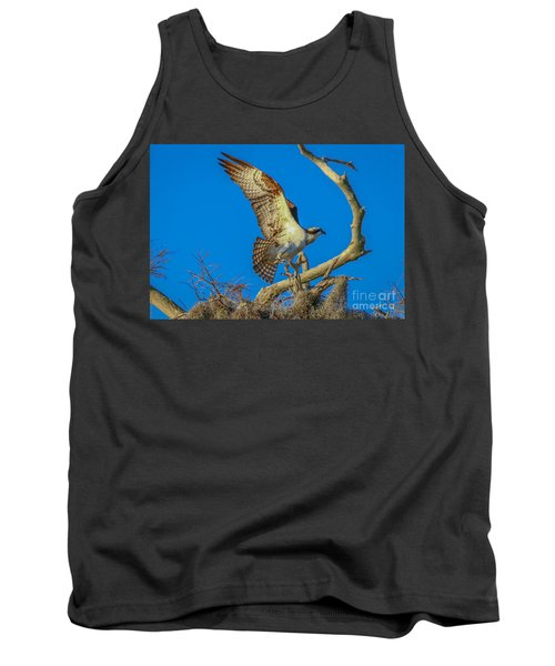 Osprey Landing On Branch Tank Top by Tom Claud