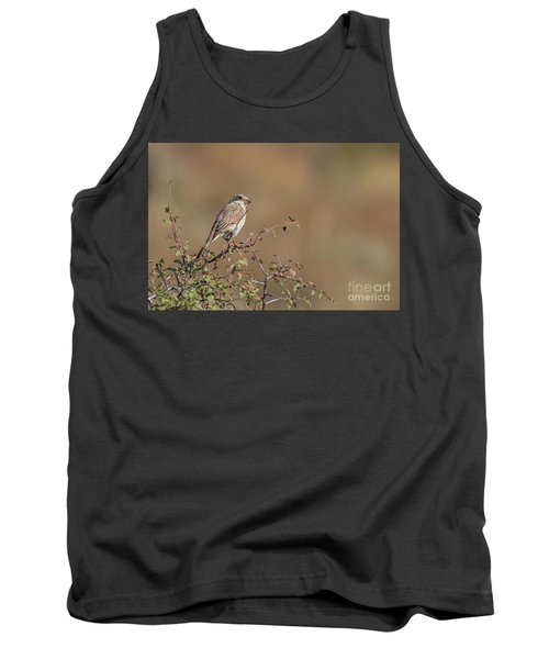 Red-backed Shrike Juv. - Lanius Collurio Tank Top