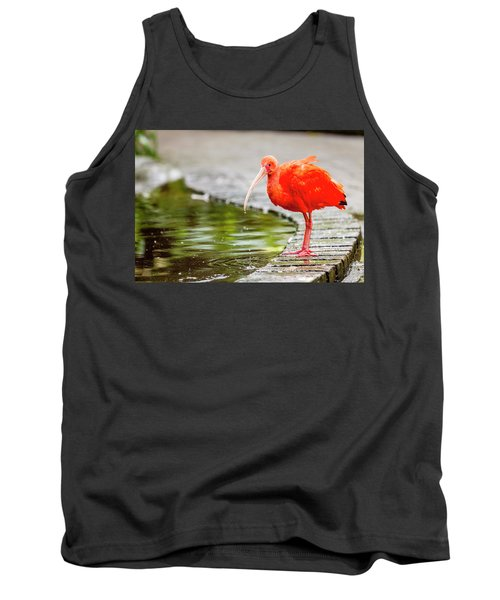 Tank Top featuring the photograph Red Ibis by Alexey Stiop