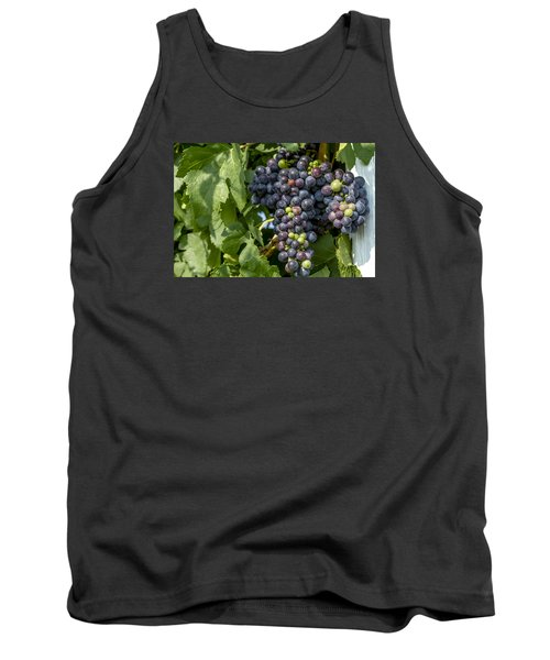 Red Wine Grapes On The Vine Tank Top by Teri Virbickis