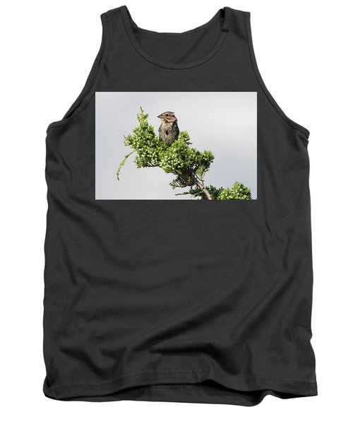 Song Sparrow Port Jefferson New York Tank Top
