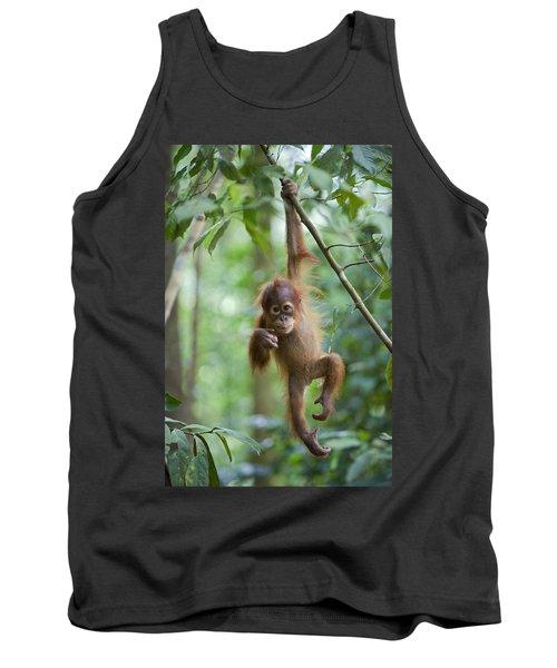 Sumatran Orangutan Pongo Abelii One Tank Top