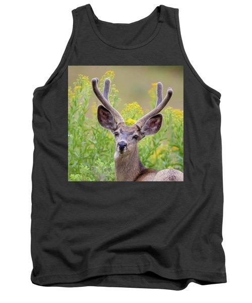 Summer Mule Deer Tank Top by Jack Bell