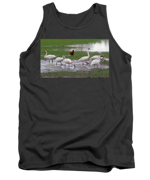 Trumpeter Swans And Rooster Tank Top