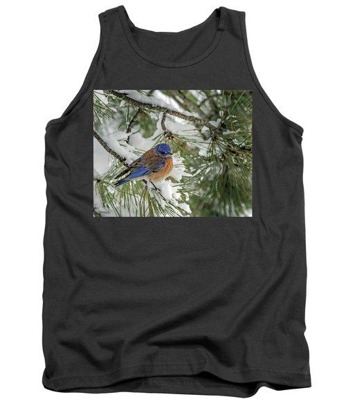 Western Bluebird In A Snowy Pine Tank Top