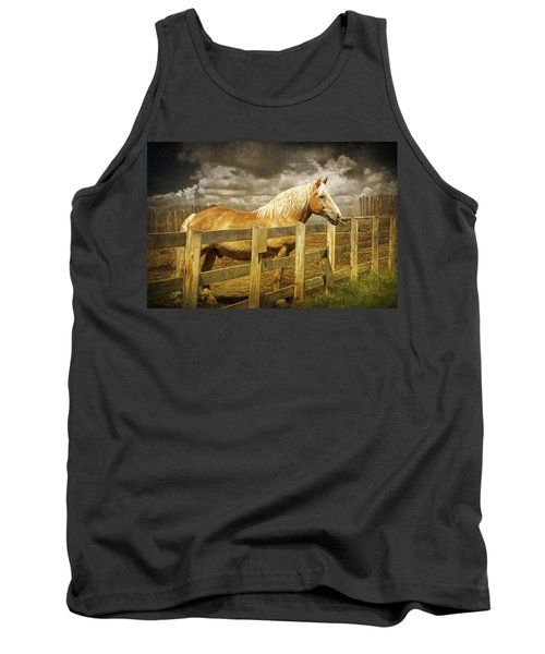 Western Horse In Alberta Canada Tank Top by Randall Nyhof