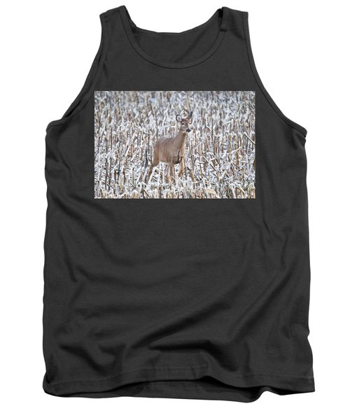 Whitetail In Frosted Corn 537 Tank Top