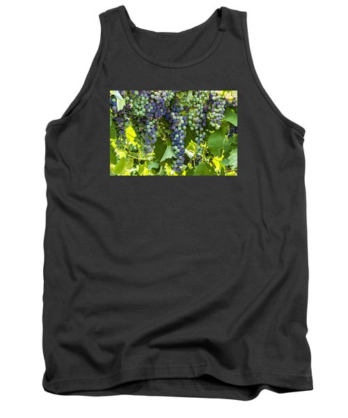 Wine Grape Colors Tank Top