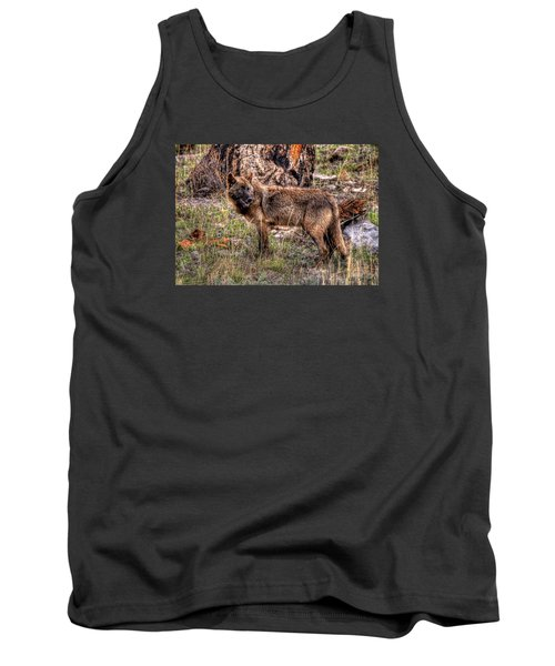 Wolf Looking Back Tank Top by CR  Courson